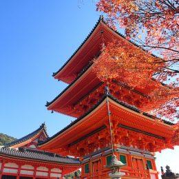 【保存版】京都市の粗大ゴミの処分方法|シール・持込・回収・料金など